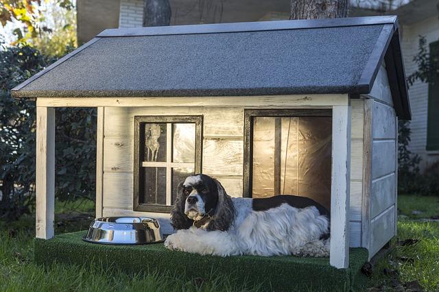 psí domácnost.jpg