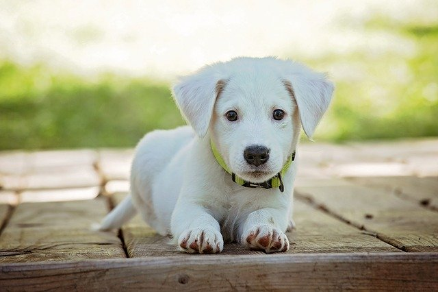 malé štěně.jpg