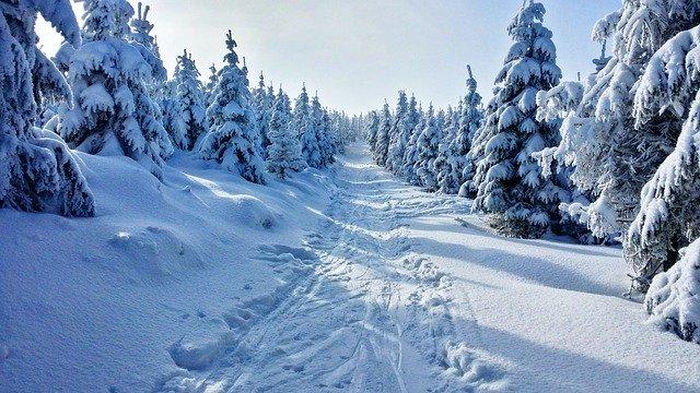 cesta zasněženým lesem